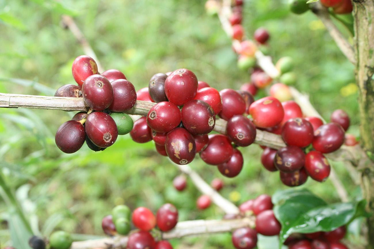 Слукин кофе