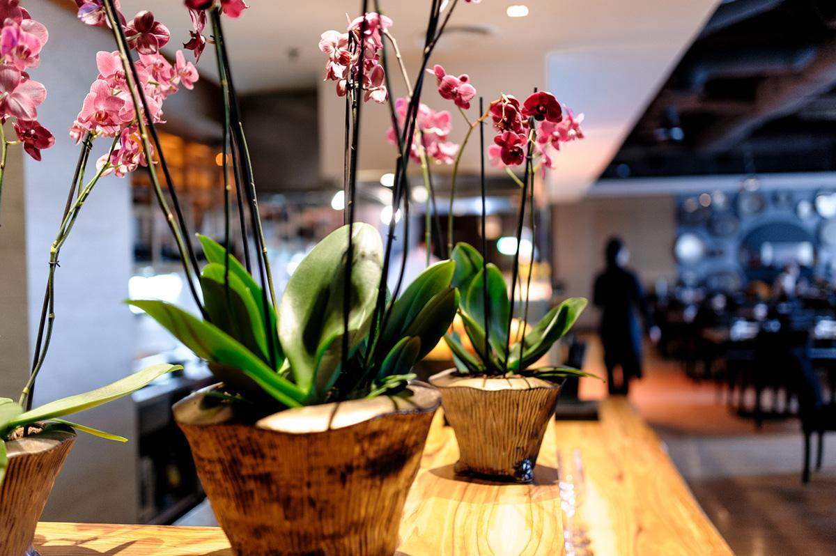 Mr Zuma flowers